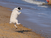 Bella during a visit to Gorleston Beach
