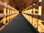 Leading Lines, The Board Walk at Filby Broad