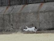 Bella in a Hurry on Gorleston Beach