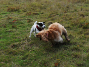 Bella and Friend at Play @ Lound Lakes