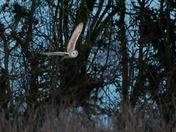 Barn Owl Weekend