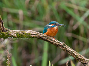 Another day waiting for Kingfishers!