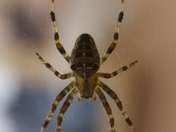 Shelter for a Norfolk garden spider