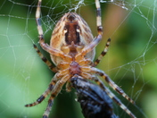 Cross Spider Trilogy