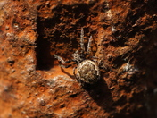 Rusty nook for hiding spider