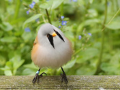 A beautiful Bearded Tit sitting on a fence..