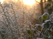 A frosty morning on Broome heath