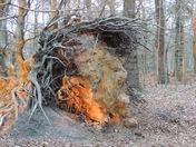Does this tree root remind you of anyone