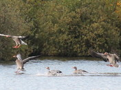 more birds from barton broad