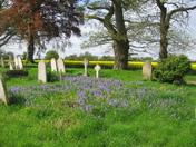 A Norfolk churchyard
