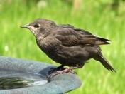 Contemplation around the bird bath!