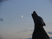 wolf and a waxing crescent moon