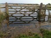 Gate in pond/field
