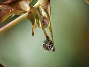 Seedpod Jewels