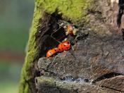 Ladybird Den