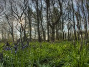 Strumpshaw woods