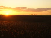 Sunset over reed beds at Waveney forest.