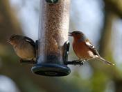 Various Garden Birds
