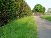 Cut backs on cutting back grass verges?