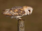 Norfolk Wildlife