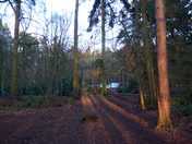 Late afternoon in Blue Boar Lane Woods