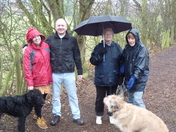 Dogs  and their walkers in the Rain
