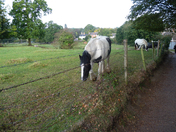 Horses grazing at the Deer Park, Old Catton