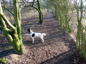 Sunny morning for Phoebes walk