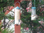Don't forget to feed the birds