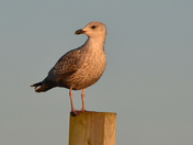 Bird at Morston