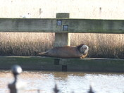 Reedham swingbridge seal