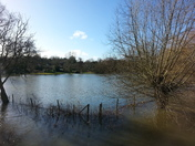 River Yare at bursting point