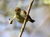 Suffolk Wildlife Trust Lackford Lakes