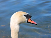 A Spring Walk Around Whitlingham Lake