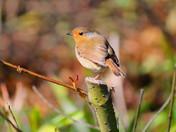 Wildlife at Wroxham