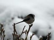 Winter Garden Wildlife