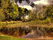 Holt Country Park