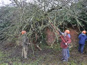 Dick Turpin 100-year-old fruit trees pruned under expert guidance