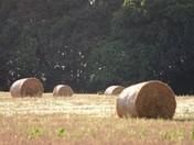 Scenes of Sutton Heath