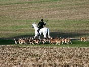 Easton Harriers Morning Hunt