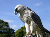 Welsh Wildlife