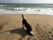 Super rescue dog Molly finds message in a bottle, Waxham Beach