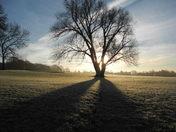 My early morning walk.