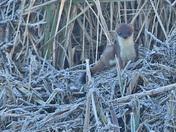 Wildlife at RSPB Strumpshaw Fen