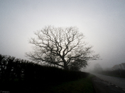 Thick Fog Covers Cranbook