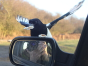 Magpie mirror magic 3