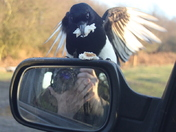 Magpie mirror magic 4