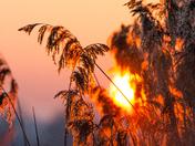 Moody Reeds