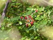 Something New. Berries
