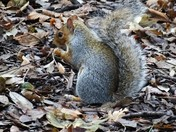 Mr Squirrel busy as always -hurrying around